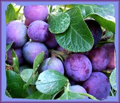 photo of blue plums